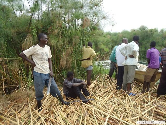 Image result for harvesting papyrus